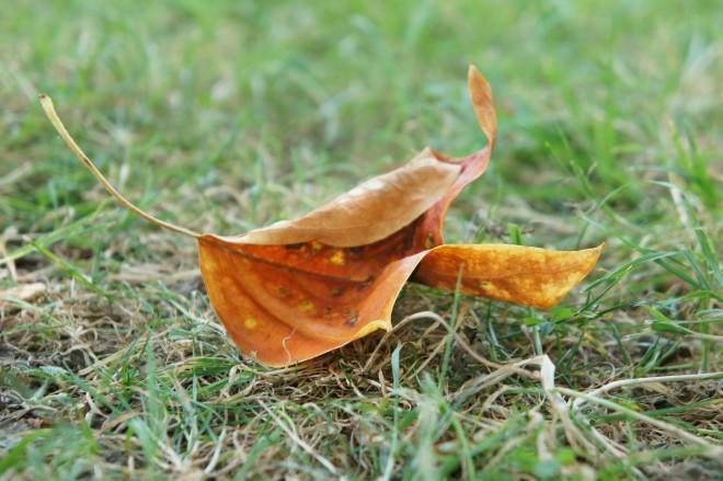 July fallen leaf