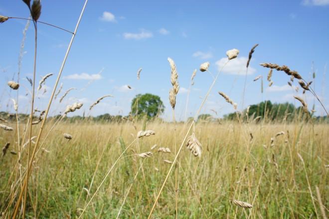 July field