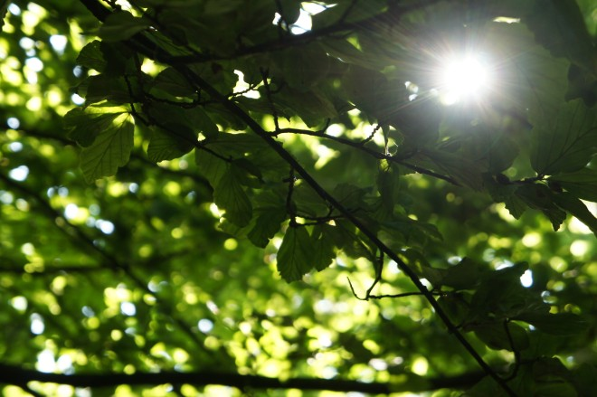 Sun & canopy