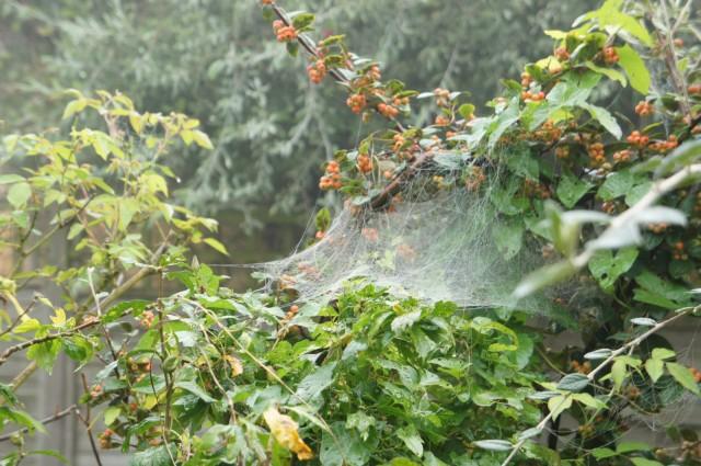 Spider web net