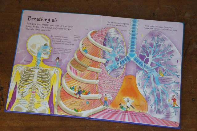 See Inside Your Body, Katie Daynes and Colin King