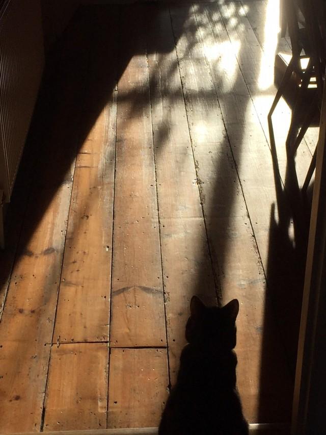 Tilly winter light